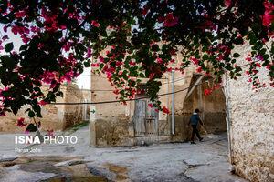 عکس/ کوچههای صورتی رنگ بوشهر
