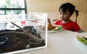 عکس/ غذا خوردن در کنار مارها