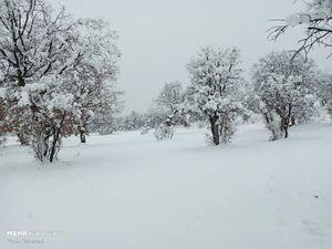 عکس/ بارش برف در خوزستان