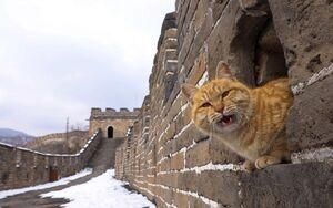 عکس/ بارش برف در دیوار چین