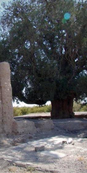 منحصر به فردترین درختهای ایران