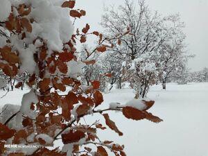 فیلم/ بارش شدید برف در تبریز