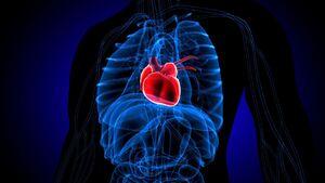 احتمال حمله قلبی در کدام روز هفته بیشتر است؟