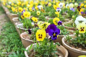 استقبال از بهار در بجنورد