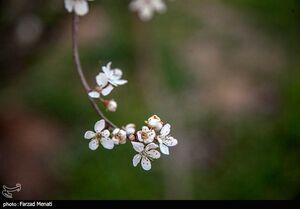 عکس/ حال و هوای بهاری کرمانشاه