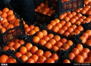 پرتقال در باغ کیلویی ٢٠٠٠؛ در بازار ۲۰ هزار!