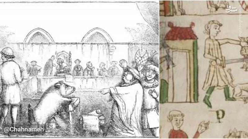 محاکمه حیوانات در قرون وسطی!