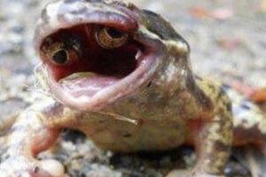 عکس/ قورباغهای با دو چشم در دهانش!