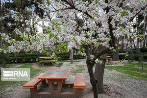 عکس/ در آستانه فصل بهار