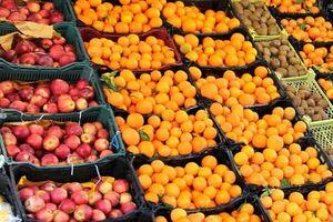 عرضه میوه به قیمت مناسب در ۲۵۳ تره بار تهران