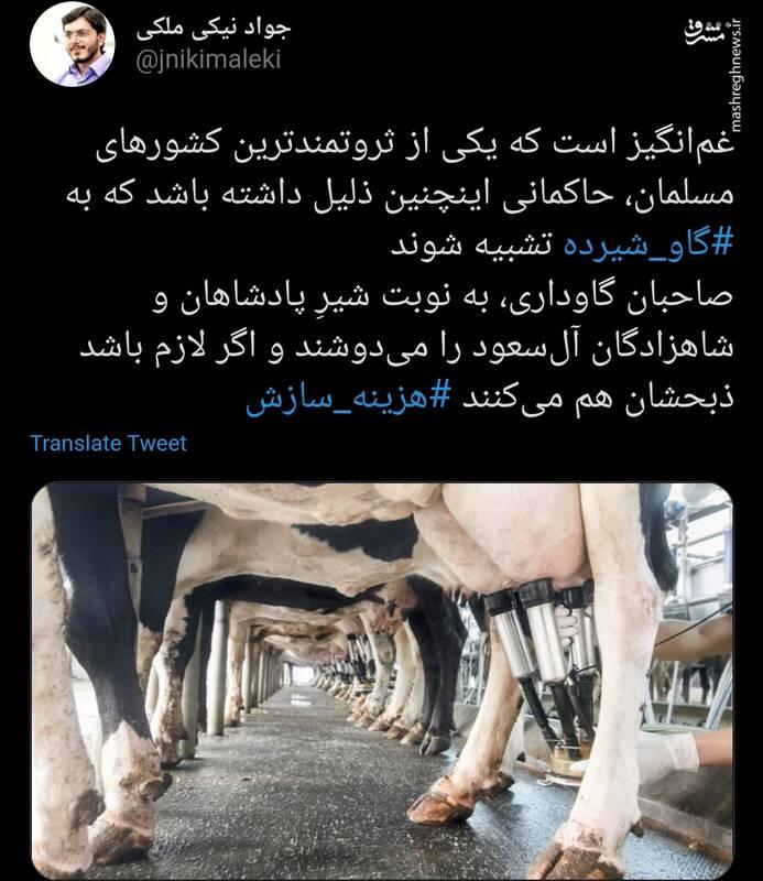 ذبح این گاوهای ثروتمند واقعا غمانگیز است!