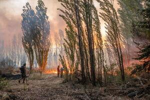 وقتی جنگلهای کالیفرنیا به رنگ خون در میآید +عکس