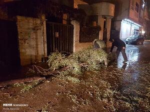 عکس/ خسارات وزش باد شدید در شیراز