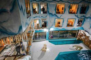 عکس/ افتتاح اولین هتل خرسهای قطبی