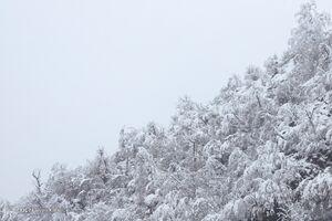 عکس/ بارش برف در آخرین روزهای زمستان