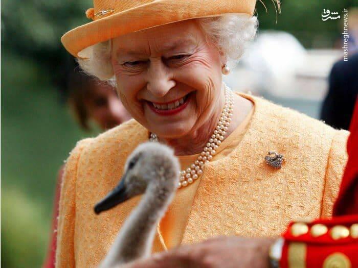 همه وال ها و ماهیهای خاویار در مالکیت ملکه انگلیس!