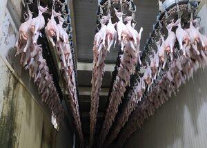 وعده جدید دولت: گوشت مرغ از فردا به میزان نیاز وارد بازار میشود
