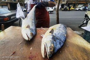 عکس/ ماهی شب عید