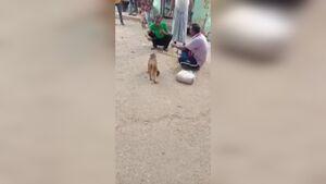 کتک زدن وحشیانه یک میمون پس از مشاجره دو مرد +فیلم