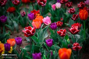عکس/ بوی نوروز در جشنواره بهاری گل