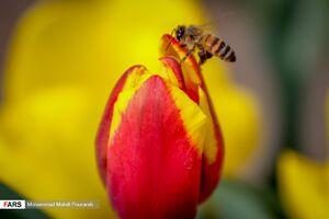 چشم تو چشم شدن با زنبور عسل +عکس