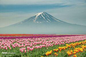 تصاویر زیبا از گلهای بهاری در جهان