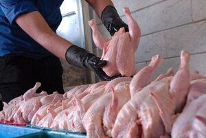 فیلم/ سومین روز عرضه مرغ با قیمت جدید