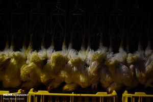 کشف ۸۴۰ کیلو مرغ احتکاری در شرق تهران