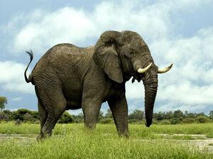عکس/ حمام فیل