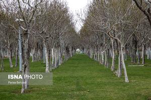عکس/ روز خلوت طبیعت در اراک