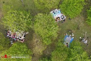 عکس/ روز طبیعت در جنگلهای مازندران
