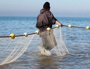 فیلم/ ماهی ۵۰۰ کیلویی در تور صیادان مازندرانی