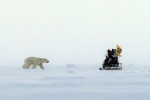عکس/ در یک قدمی خرس قطبی