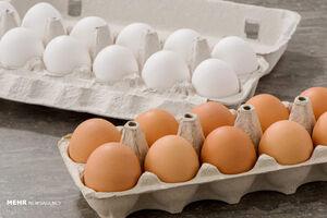 قیمت تخم مرغ بالاخره کاهش یافت