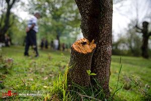 چگونه عوارض آلرژی فصلی را کاهش دهیم؟