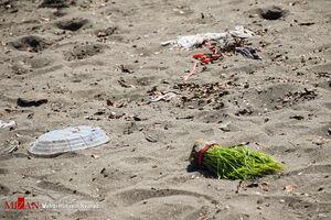 عکس/ زبالههای نوروزی