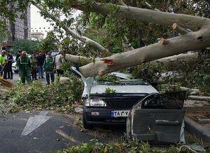 فیلم/ سقوط درخت روی خودروها در خیابان ولیعصر
