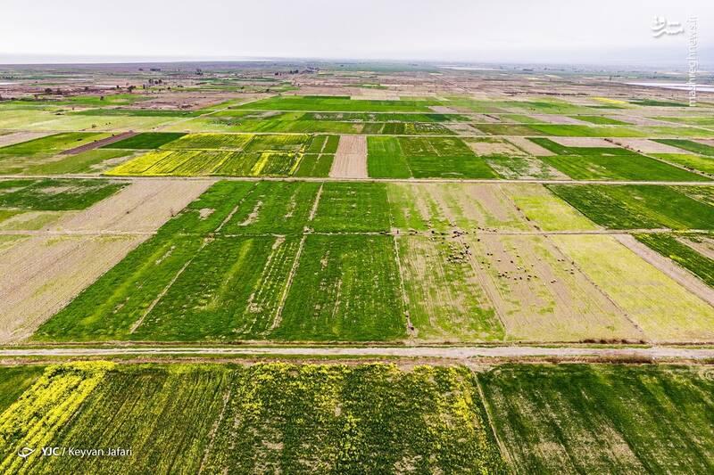 3102597 - تصاویر زیبا از مزارع دانههای روغنی کلزا