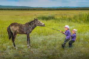 عکس/ اسب لجباز