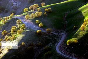 طبیعت بکر جنگلهای «هرسین» کرمانشاه