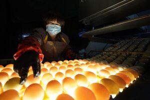 عکس/ تکنولوژی در صنعت کشاورزی چینیها