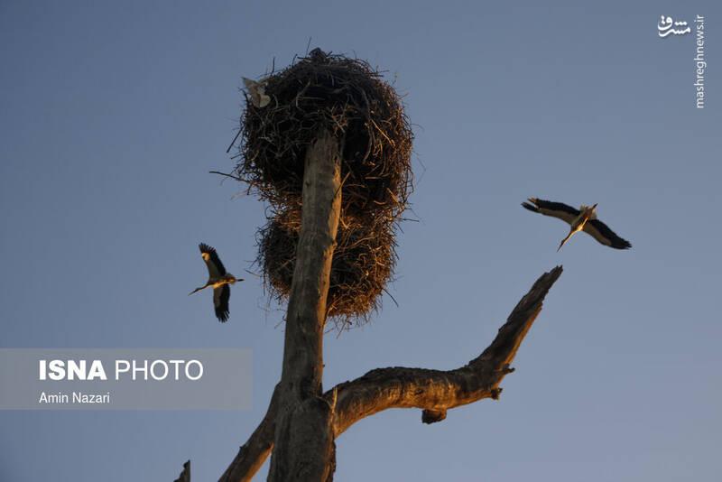 عکس/ باغ لک لکهای دزفول