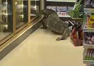 ورود یک مارمولک عظیمالجثه به فروشگاهی در تایلند