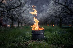 عکس/ روش کشاورزان سوئیس برای مقابله با سرما