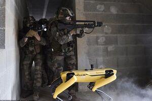 پای سگهای رباتیک به ارتش فرانسه باز شد