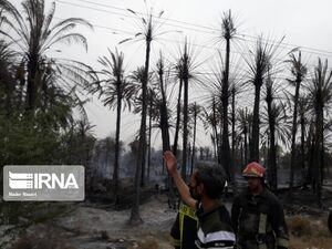 فیلم/ مهار آتشسوزی درنخلستان های سیاهوی بندرعباس