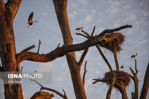 عکس/  باغ زیبای لک لکها در دزفول