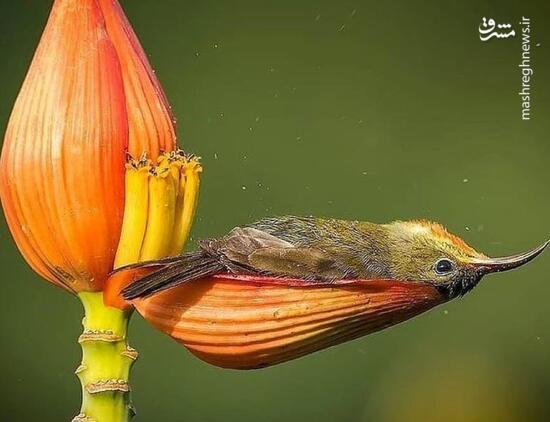 عکس/ استراحت پرنده در گلبرک