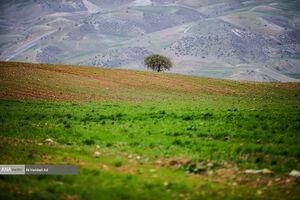 عکس/ طبیعت بهاری چهارمحال و بختیاری
