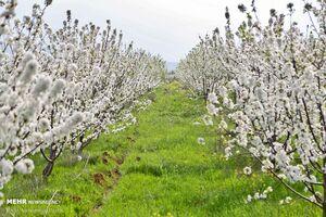 عکس/ بهشت «اردبیل» در قاب بهار